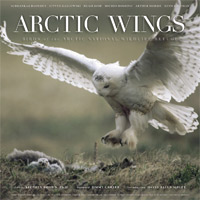 Arctic Wings.jpg
