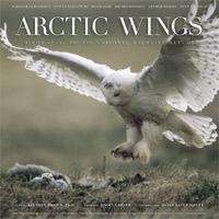 Arctic Wings.jpg