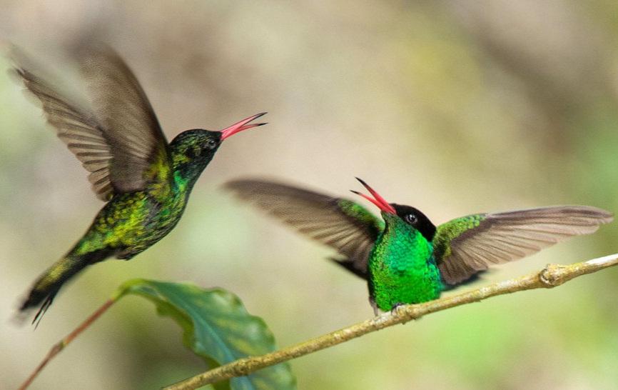 Bringing Back the Birds - American Bird Conservancy