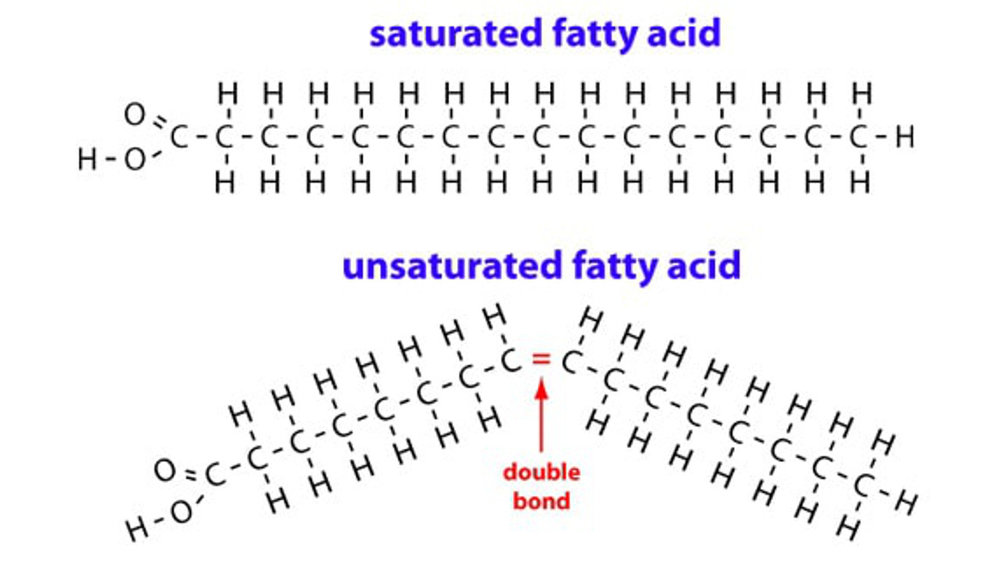 unsaturated and saturated fatty acid