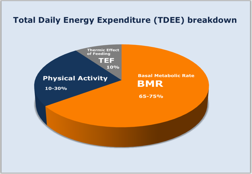 total daily energy expenditure breakdown