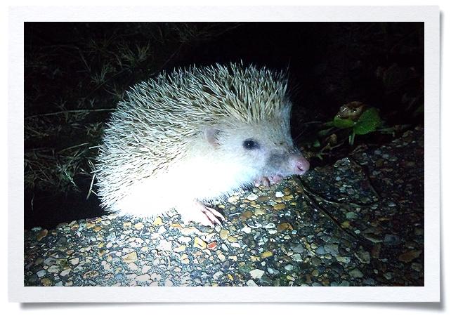 Frame-hedgehog.jpg