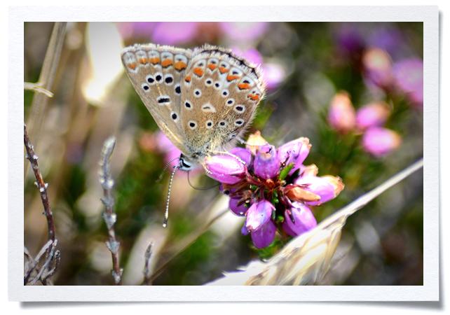 Frame - Purple Flower.jpg
