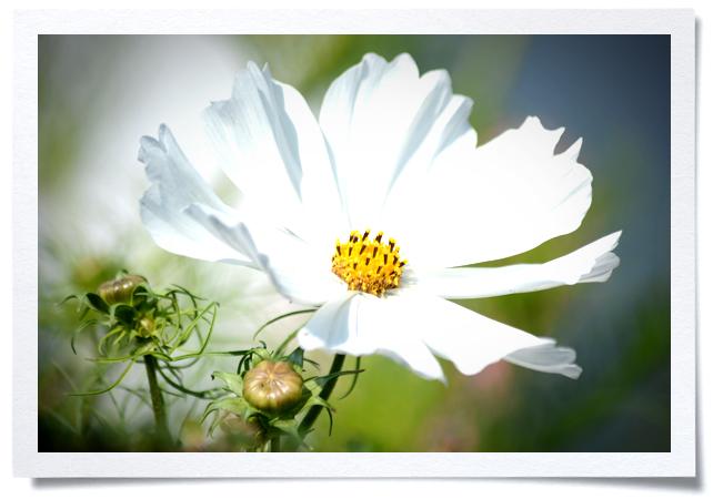 Frame - White Flower.jpg
