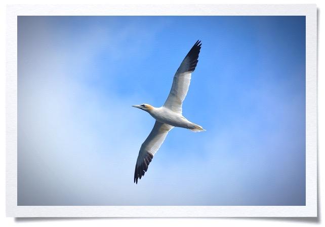 Frame - birdwatching 1.jpg