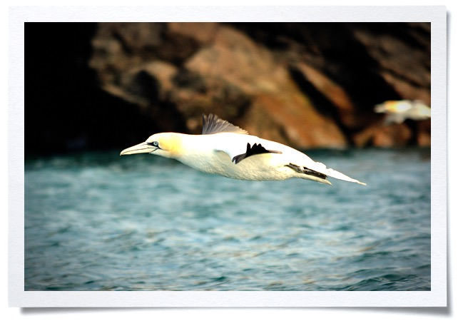 Frame-wildlife-2.jpg