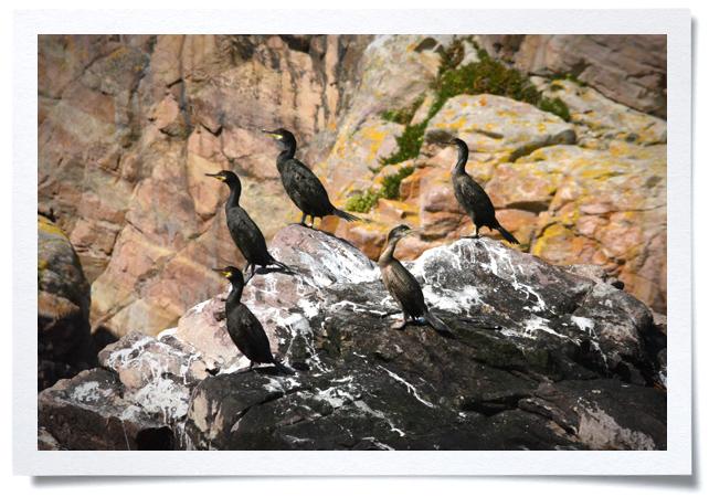 Frame - Blackbirds.jpg