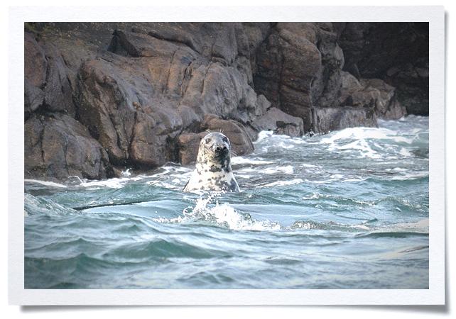Frame - Seal.jpg