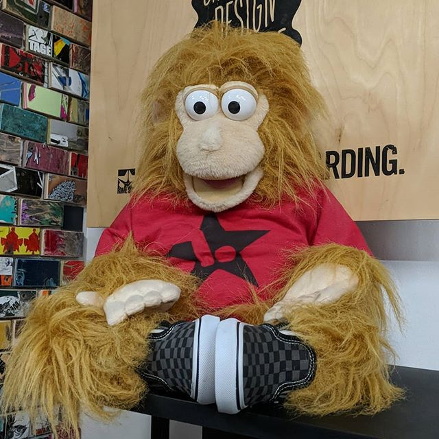 Spanky, the shop monkey, has seen a lot during his tenure here at the shop as official talent scout. Some of his behavior has been questionable... I may have a hard time writing a recommendation for him as he looks for future employment once the shop is closed. #paypeanutsgetmonkeys #lbsarmy