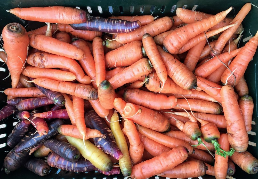 1. Access to high-quality, flavor-rich, produce. - Harvested fresh before delivery, you can taste (and see!) the difference in the quality of our produce. After the first crunch into our purple carrots or a BLT bite made with our spicy mustard greens, you'll never return to wilted store produce!