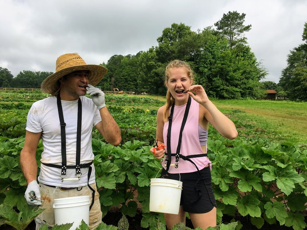 Volunteer Brookie Mcllvaine (right) and farm manager, Shawn Jadrnicek (left) harvesting Okra! Wear long sleeves!