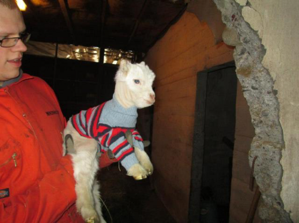 Casanova and his life-saving sweater!