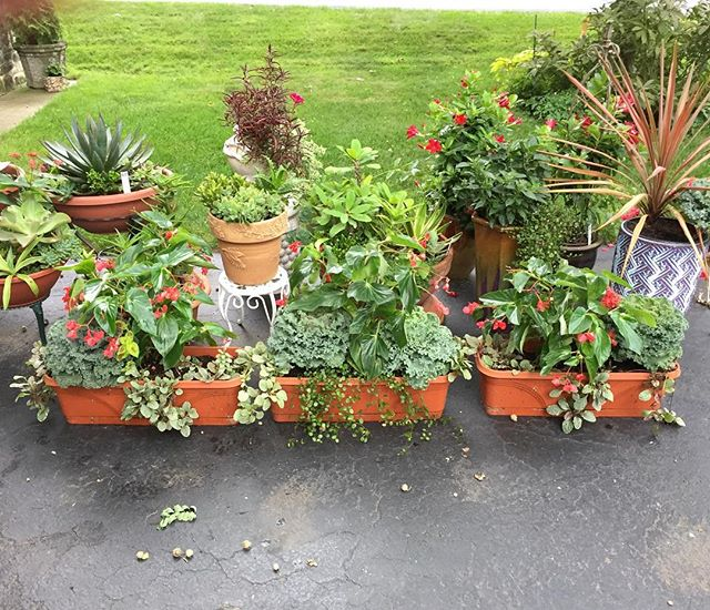 If your dad is a gardener and if you promise to take him to dinner he will make you gorgeous window boxes for your new home if you're lucky.
