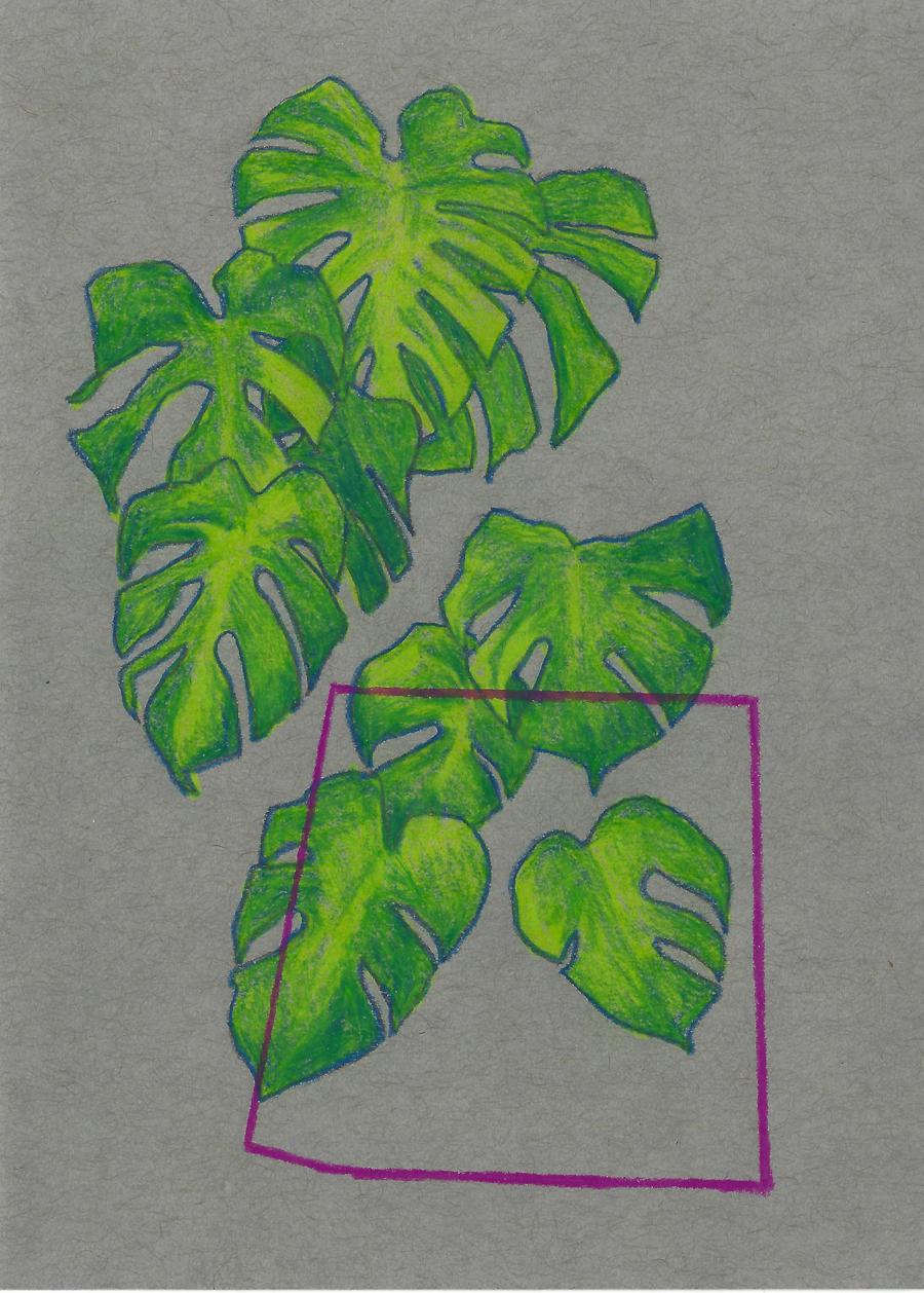 Plant_allegra_cropped_web.jpg