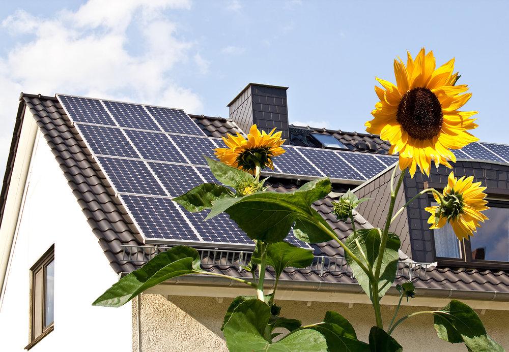 Solar-flowers.jpg