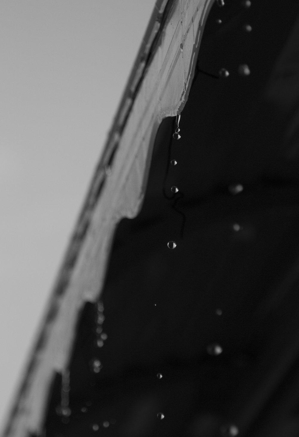 bushdropsmedium.jpg