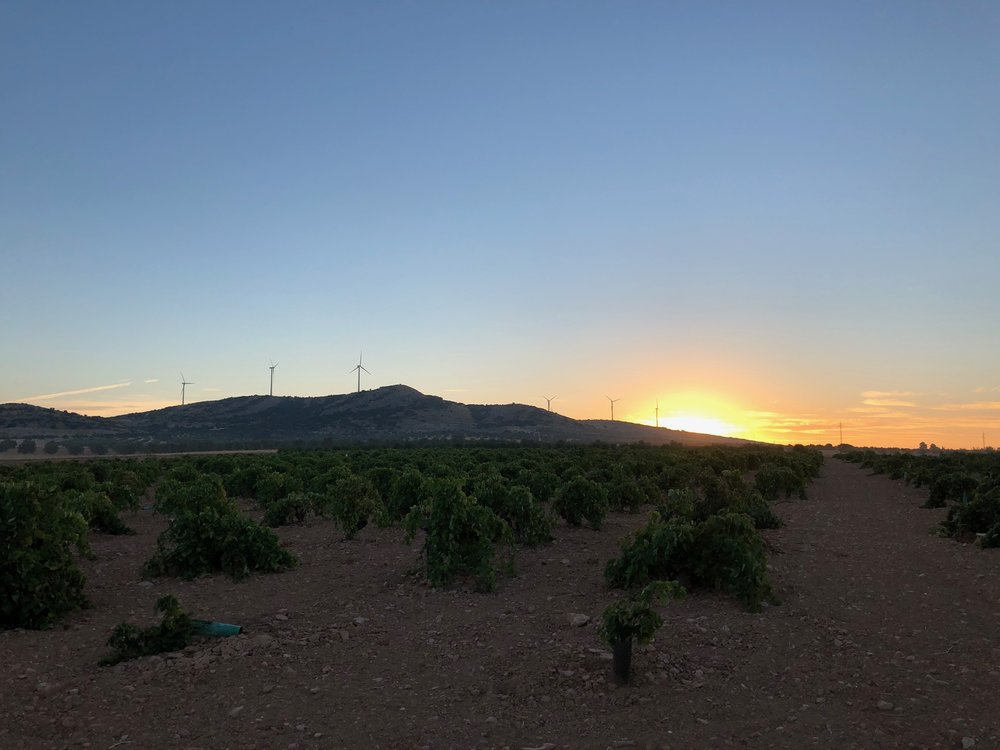 SUNRISE AND MODERN WINDMILLS FOR DON QUIXOTE