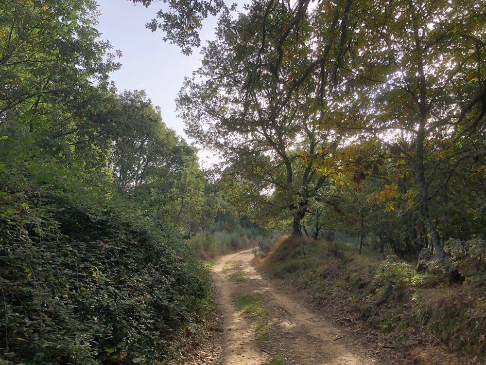 Oak forests