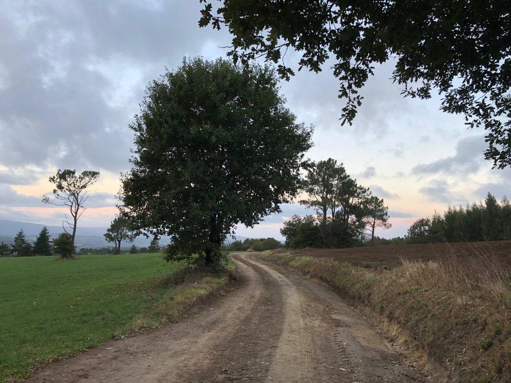 Farm lands, muted sun