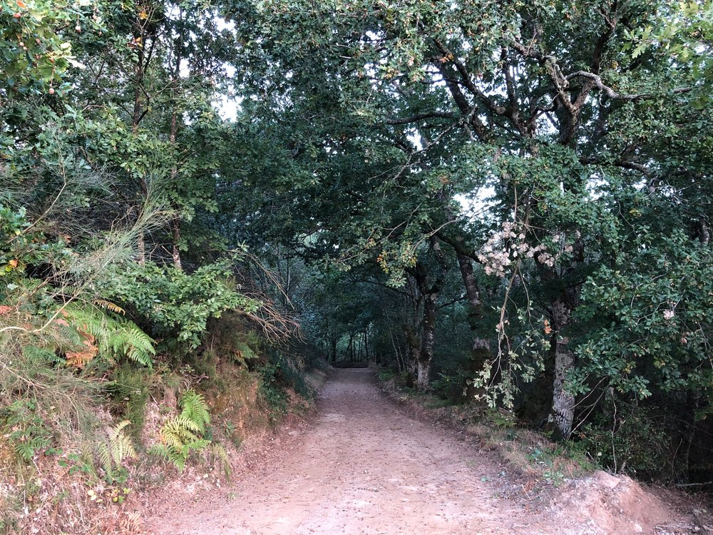 Tolkien forest
