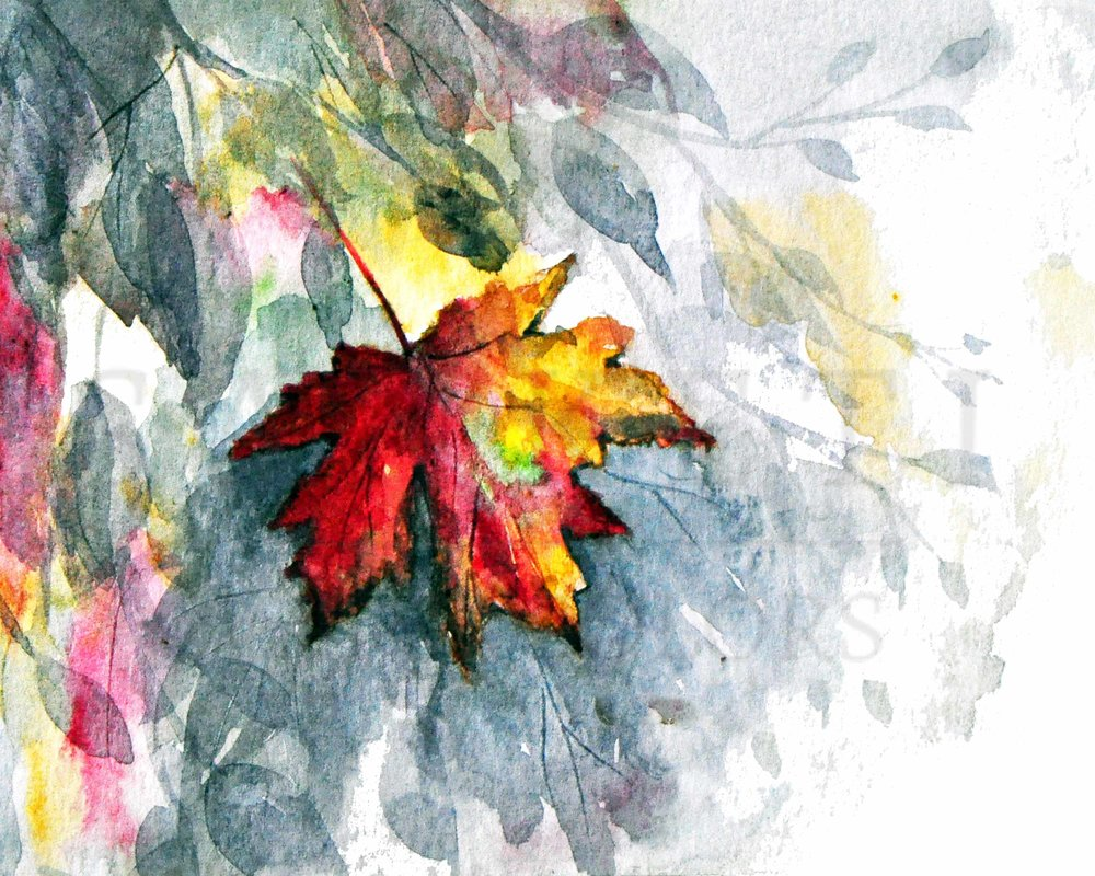 maple leaf 300.jpg