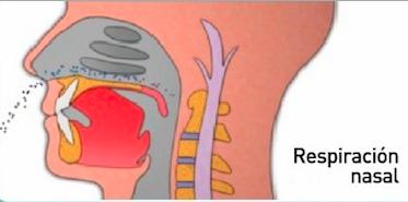respiracion nasal.png