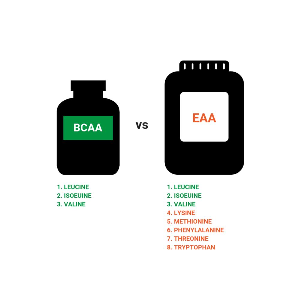 bcaa-vs-eaa-2.png