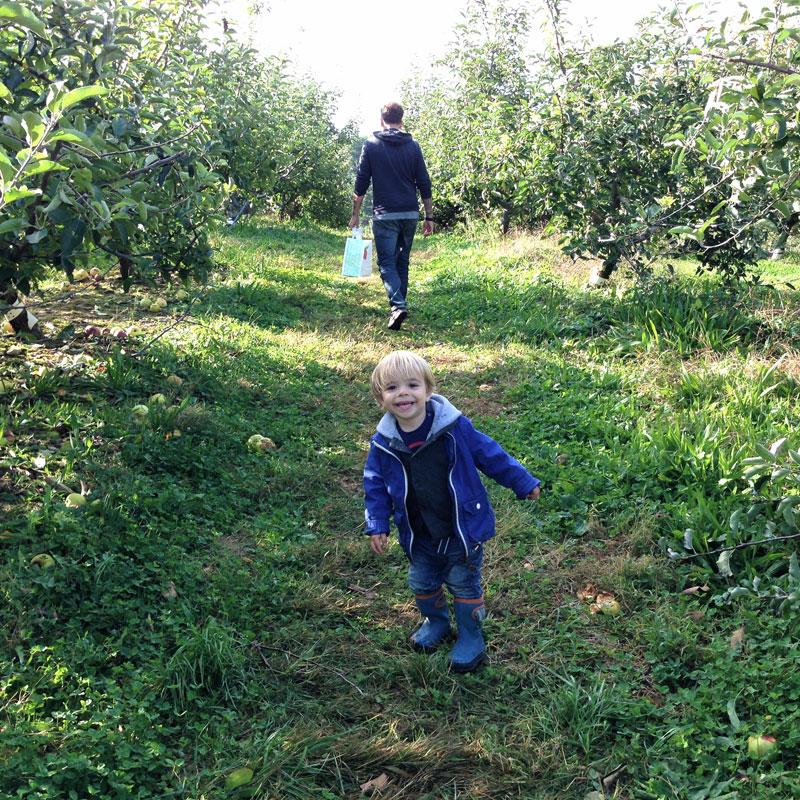 apples6.jpg