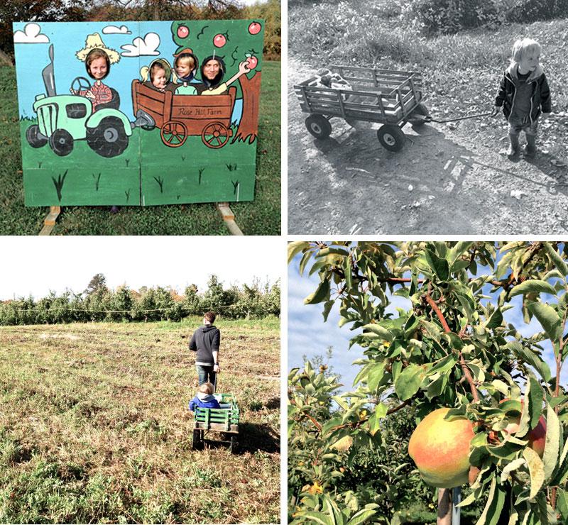 apples7.jpg