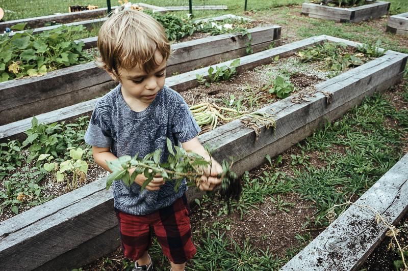 garden9.jpg