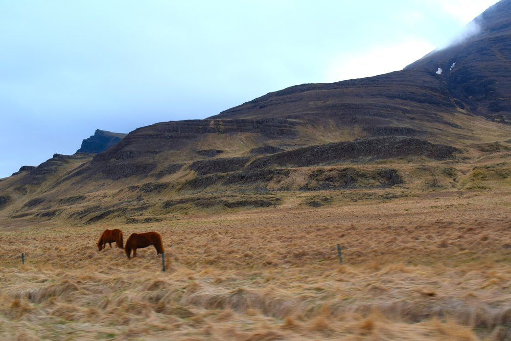Horses and hay in Iceland.