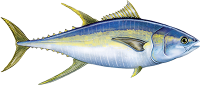challenge_tuna.png