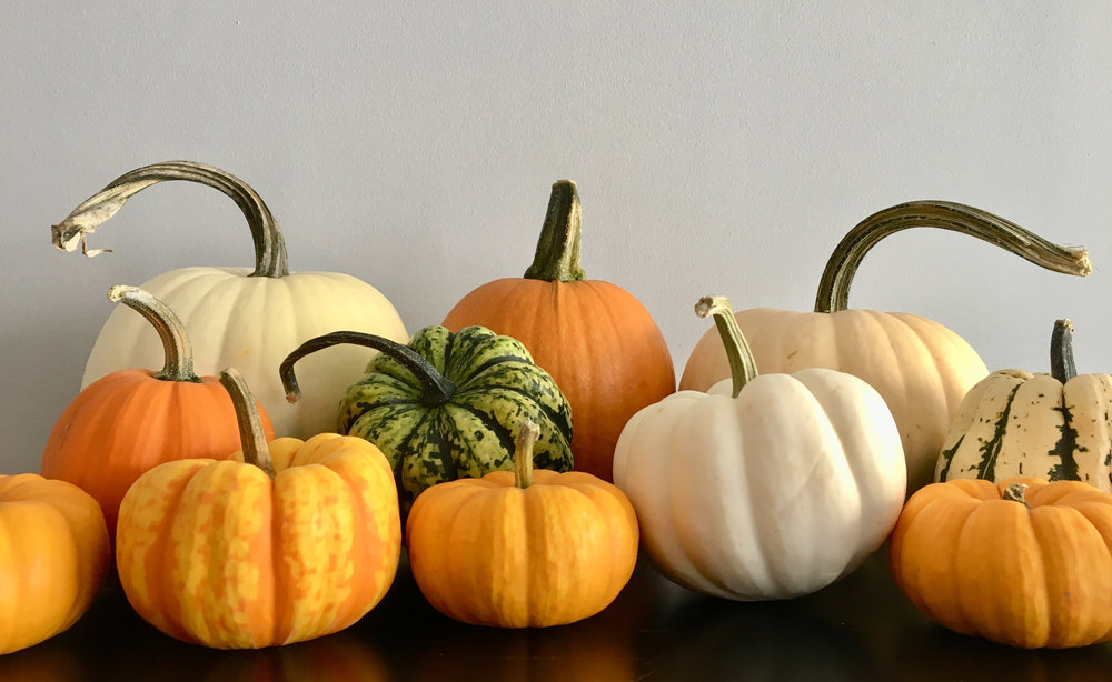 A selection of gourds for Autumn.