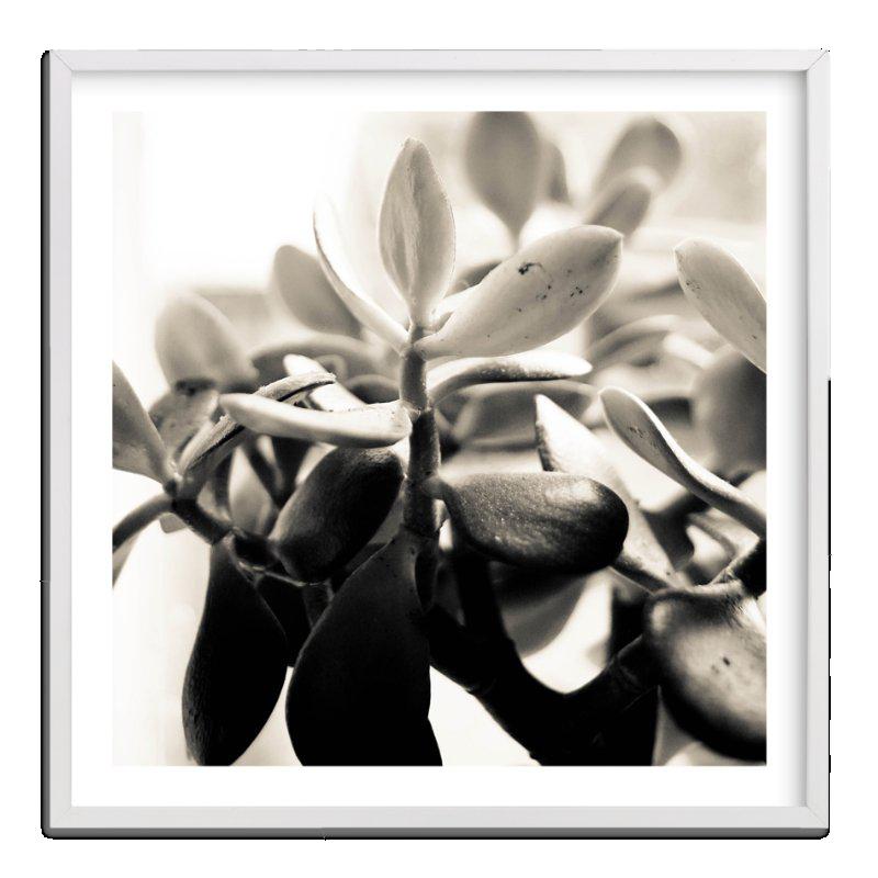 Sepia Succulent Art