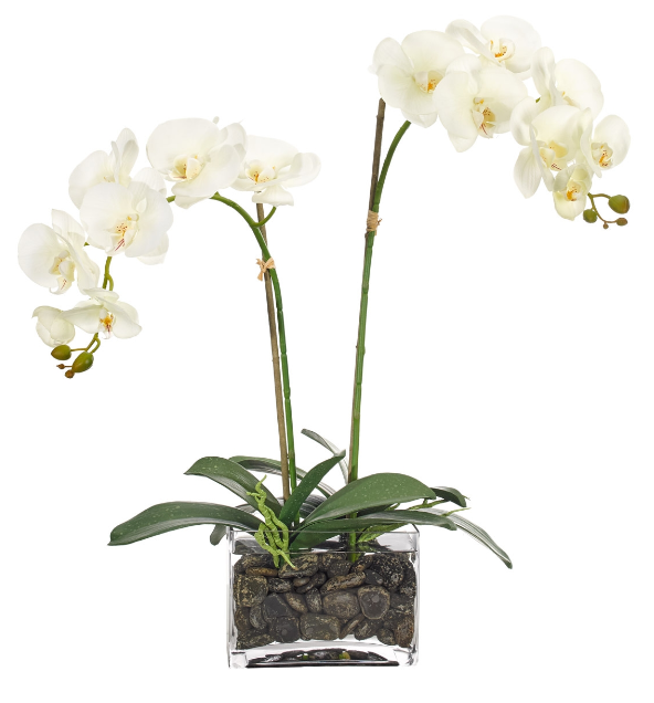 Screenshot_2018-09-08 Orchid.png