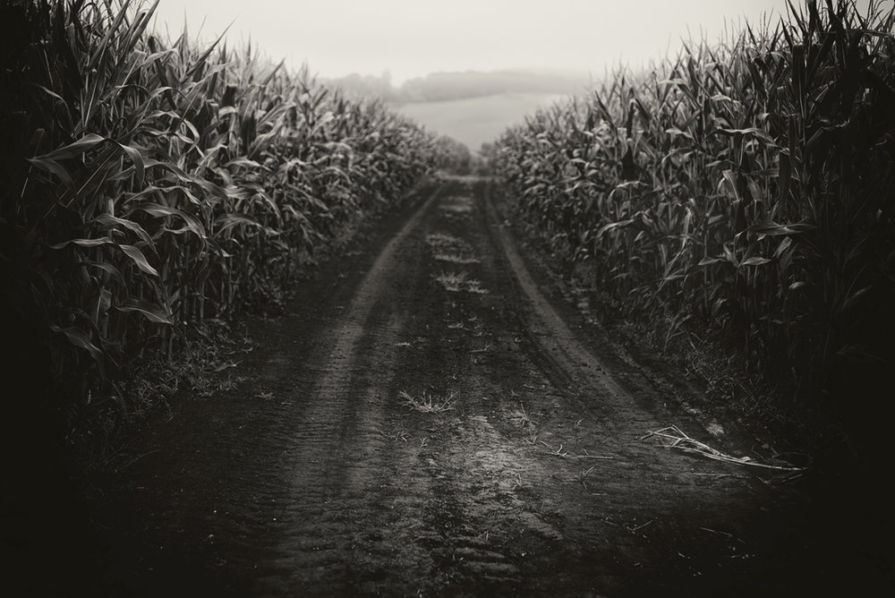 Independence Corn Field - the soil_small.jpg