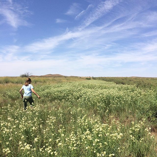 Scouting for milkweed in Lordsburg, NM. We hit the jackpot! . . . . . #pollinators #milkweedformonarchs #nativeplants #asclepias #newmexico