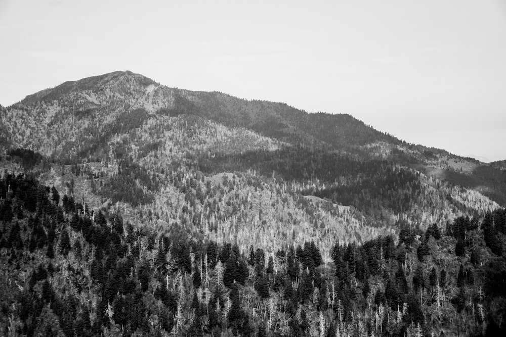GSMNP BLACK AND WHITE LANDSCAPE 2.jpg