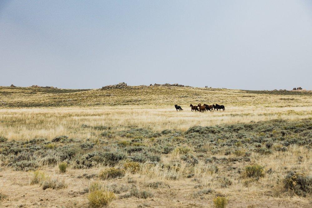 Wild Horses in the Basin