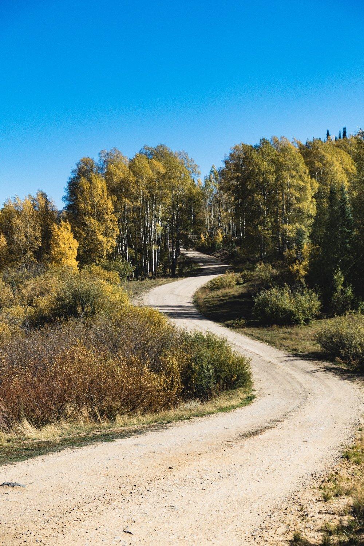 Beautiful Aspens along the road