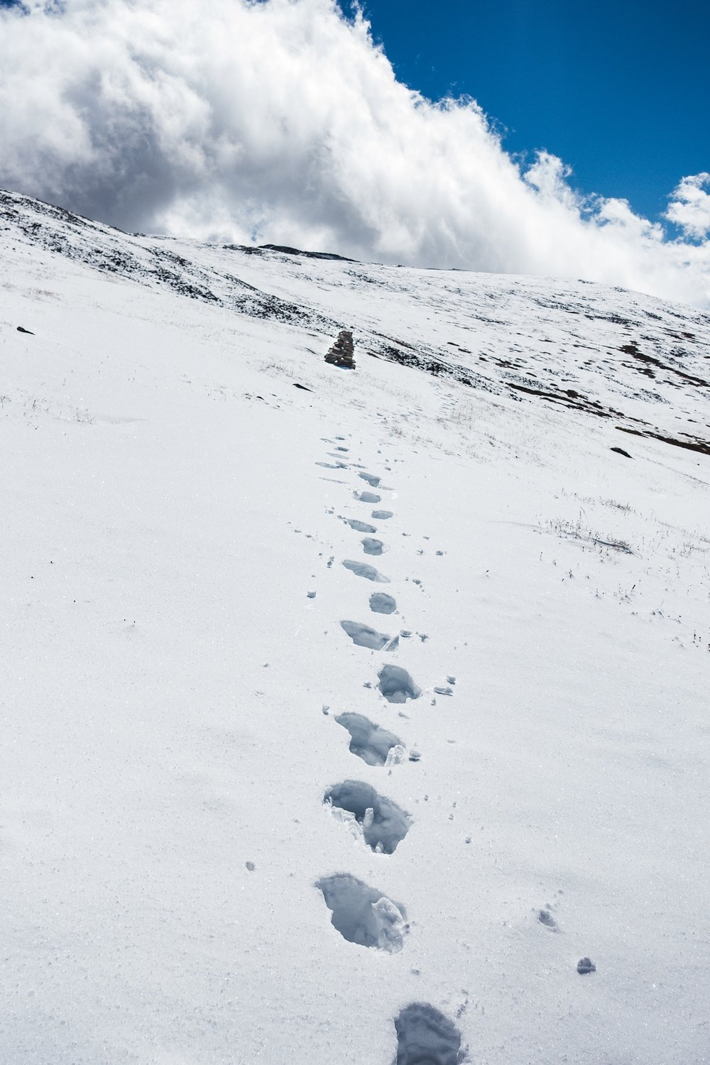 Merlin and Hummingbirds footsteps on the other side of the ridge