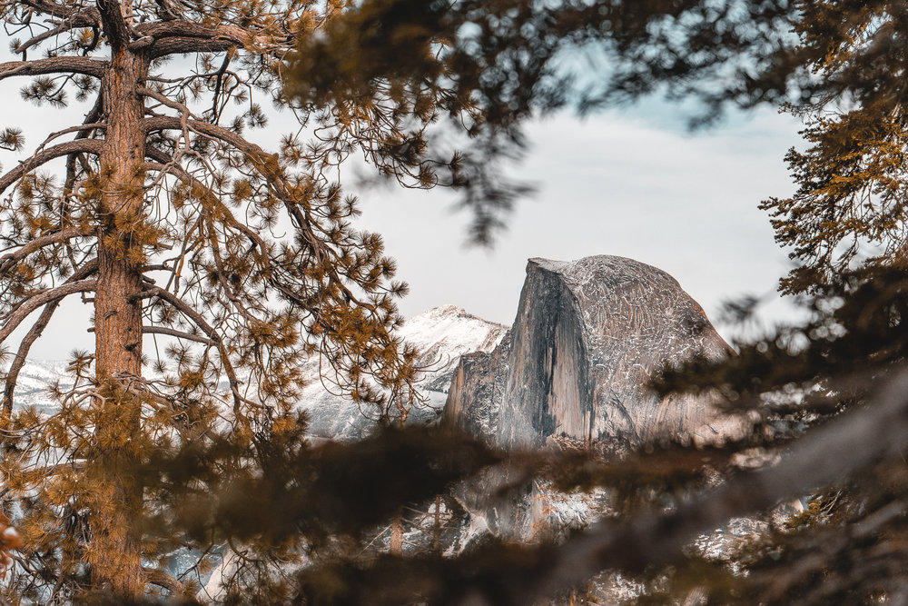 Halfdome through the trees on Glacier Point