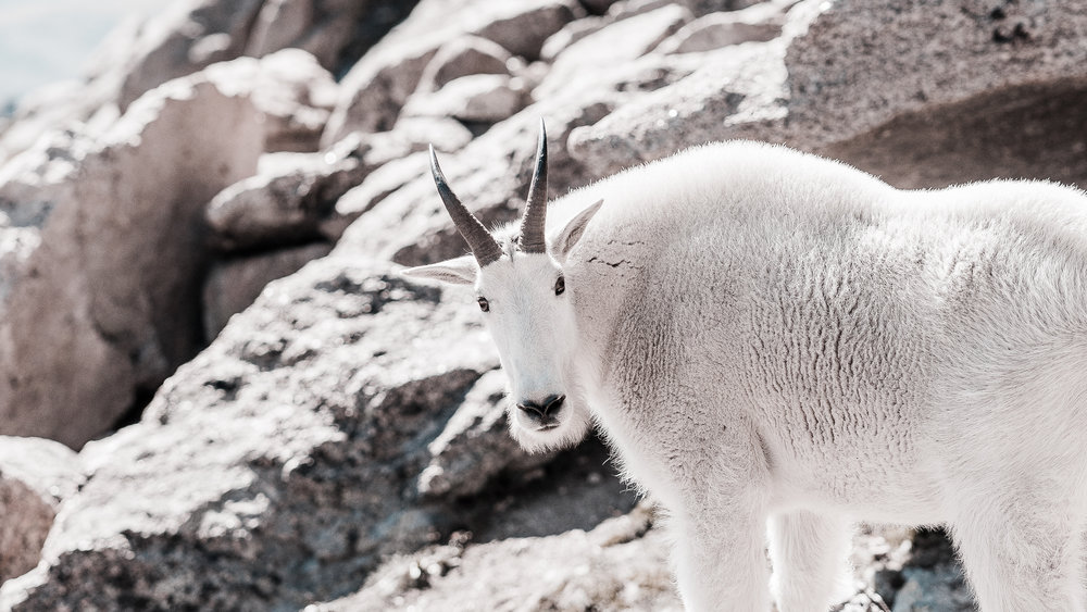 Another one!