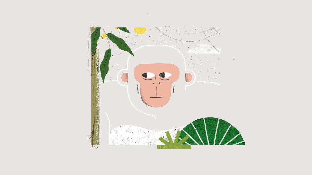 Stonyfield_monkey_01C.jpg