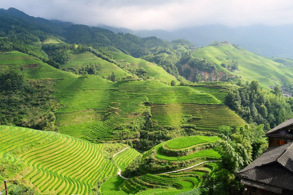 Sustainable Landscape: How To Reduce Rice Methane Emissions? -