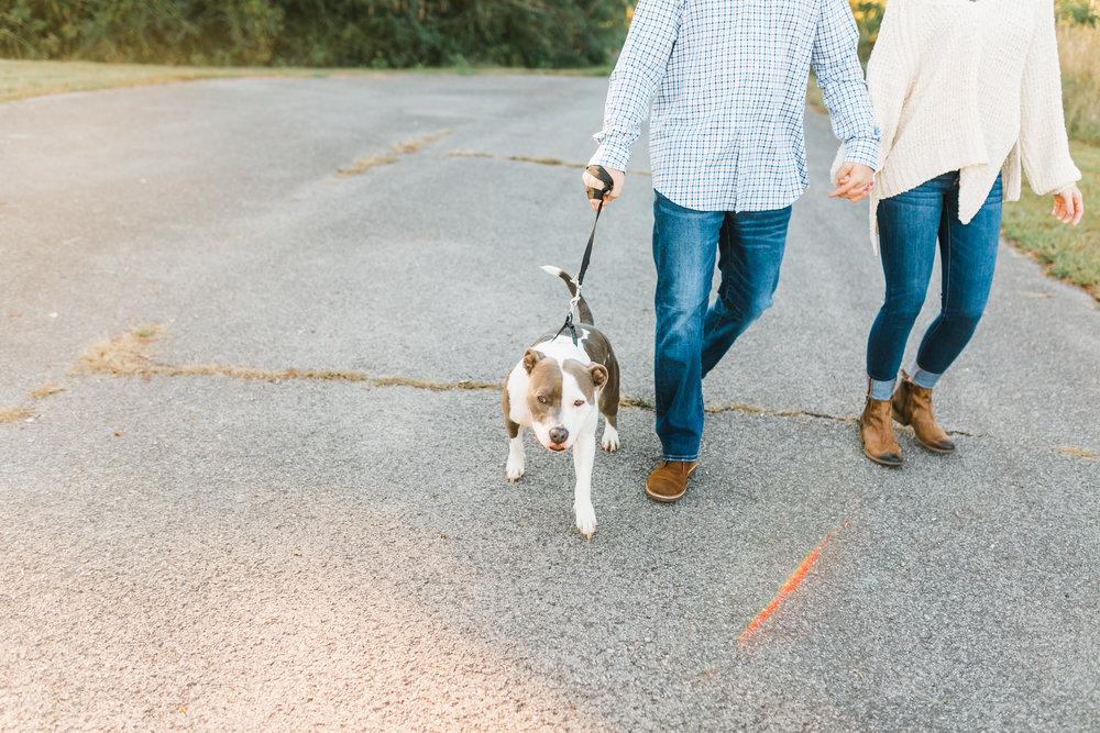pitbull pup melton hill park