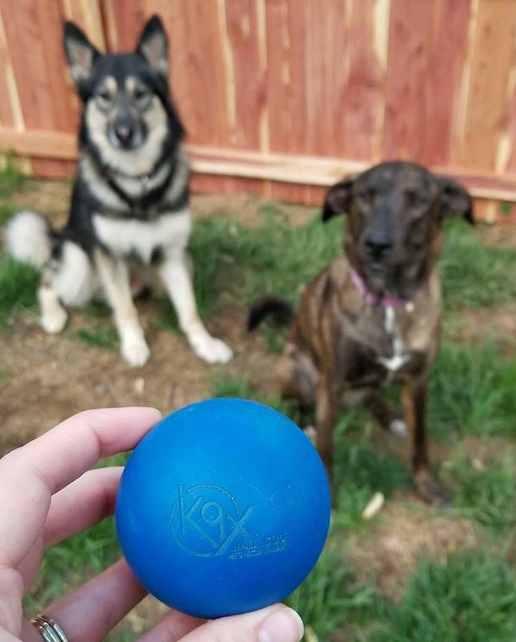 Nova and Odin are two tough pups! Part of a group that supplies police and military working dogs with equipment, Nova and Odin tested out our K9X Ball, they weren't disappointed! Thank you Dogs On Duty!