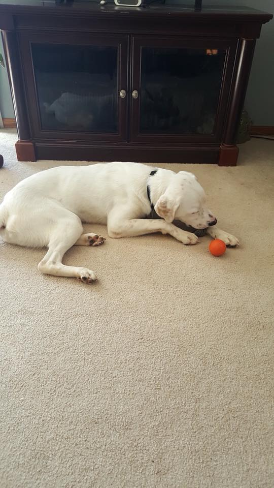 Ripley had a heck of a day. He found his new home AND his favorite ball! Yay Ripley!