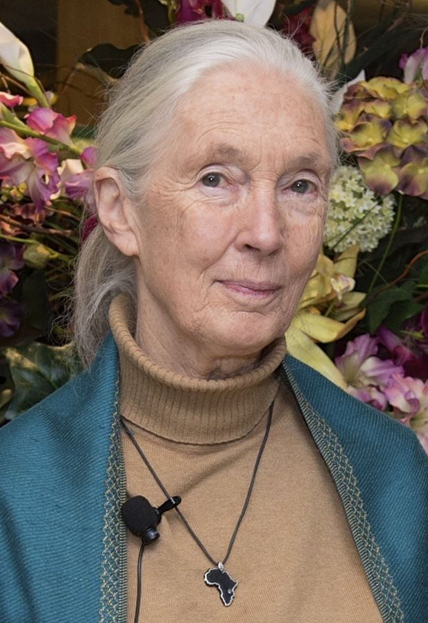 Jane Goodall, Ph.D.  Primatologist