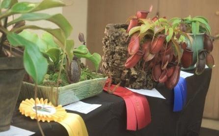 2017 BACPS Carnivorous Plant Show & Sale
